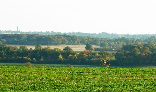 LesBroquets102008_  009